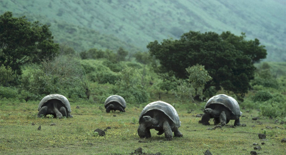 A group of giant tortoises. They are not vaccinated against diseases as a child, use no medicines and never visit the family doctor. Still they are, like most other animals, far less often ill than we in our 'health care society'. Should that not be the other way round?